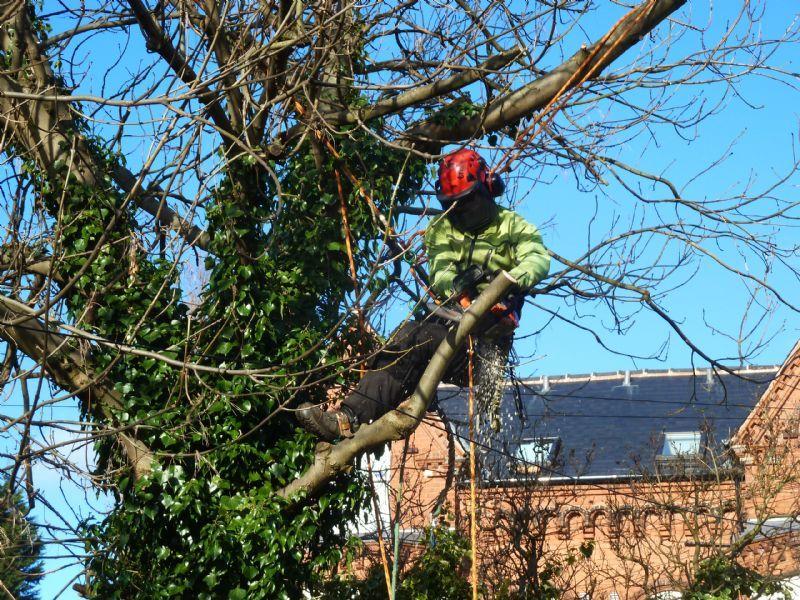 tree trimming Oklahoma City