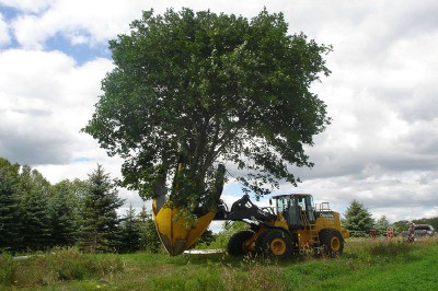 Tree Removal Service Oklahoma City